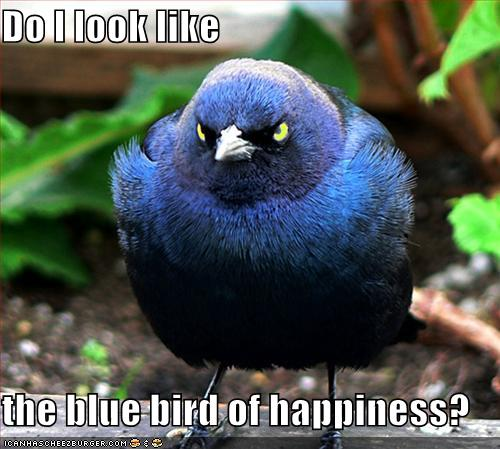 Funny-pictures-this-is-not-the-blue-bird-of-happiness